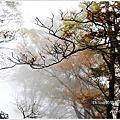 【宜蘭】2014太平山台灣山毛櫸步道