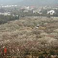蘇州香雪海賞梅2008/3/8
