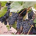 2010‧秋‧加州酒鄉