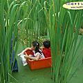 茭白筍桶子體驗-小朋友歡樂集錦