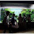 SKYTREE 的水族館