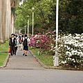 99.3.6  228公園  壽山公園  台大  杜鵑開