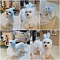 2009.11.22喜舖同樂會&Blueberry購置冬衣