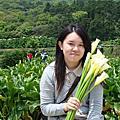 2009.04.12竹子湖採海芋