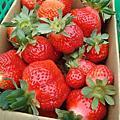 2010.02.04大湖採草莓