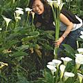 玫瑰季&海芋季 2007-03-31