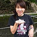 苗栗公館賞油桐花 2007-05-01