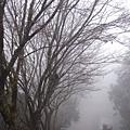 宜蘭太平山的霧淞