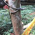 20080427 惠蓀林場