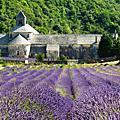 勾禾德(Gordes) & 塞農克修道院(Abbaye de Senanque)