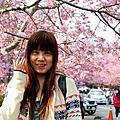 武陵之春--賞櫻趣