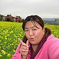 苗栗苑裡油菜花花海遊蹤(20110122)