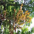 2006.8.7.永觀堂