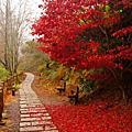 季節之旅-楓葉