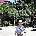 2015福壽山追楓~103次露營