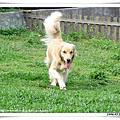 2006.05.21 puppydog