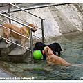 2006.07.22.23愛狗游