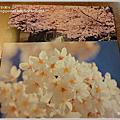 2010.03.25 日本關西 Day3