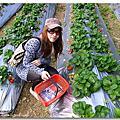 大湖採草莓 with 哈雷們~