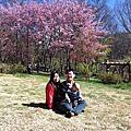 2011。春。武陵賞櫻