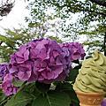 嵐山 紫陽花 GUSTO咖啡館