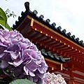 京美茶屋 平安神宮