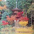 京都 淨瑠璃寺
