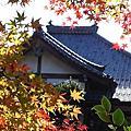 京都鷹峰 常照寺