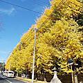 京都  上御靈神社 今宮神社 大德寺