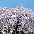京都 本滿寺 妙覺寺 水火天滿宮 本法寺