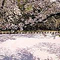 2018 弘前 植物園、中濠遊船