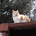 2018廣島秋遊 素面相見在尾道