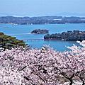 2019南東北追櫻 松島櫻花海