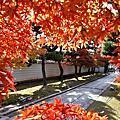 2019京都秋遊 西陣樂悠遊