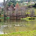 20170128南庄雲水度假森林