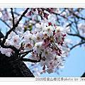 2009.3.21阿里山櫻花綻放
