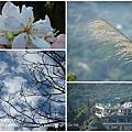 2011.5.9彰化社頭山城之戀