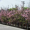 2012.3.22芬園休憩園區賞櫻去~