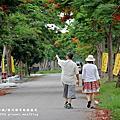 2014.5.24溪州綠筍路鳳凰花