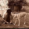 老狗與小孩