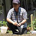 有機蔬菜栽培
