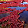 海底燕窩珊瑚草 (原來他不是長在海裡)