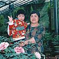 杉林溪   牡丹花
