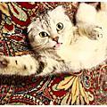[毛小孩] 貓