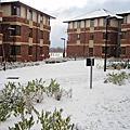 Snow, Jan.