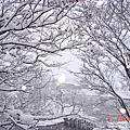 071205 北海道雪國物語五日