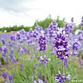 2012-07-13 北海道花花世界‧NIDOM森林湖畔小木屋・層雲峽溫泉五日