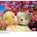 2008 甜心熊 & Honey熊