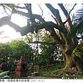 2007.10.21 桃園縣‧楊梅_老樟樹(探訪祕境)