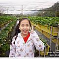 20120126。苗栗大湖採草莓